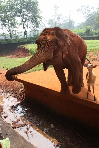 два друга слон и моська