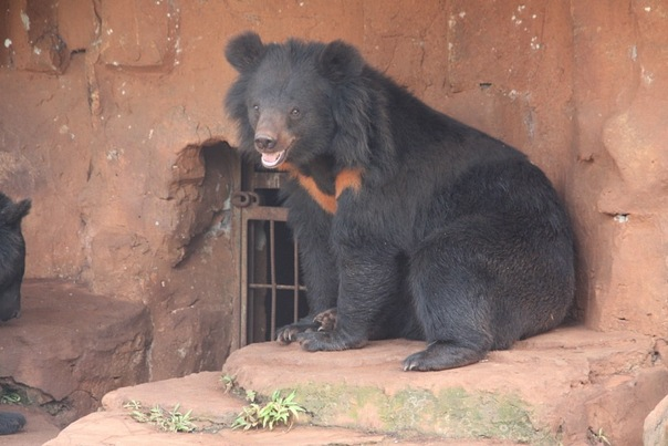 медведь в парке