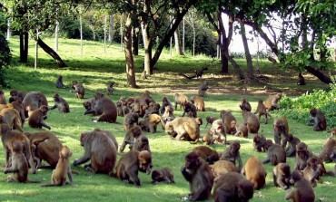Остров обезьян на Санья